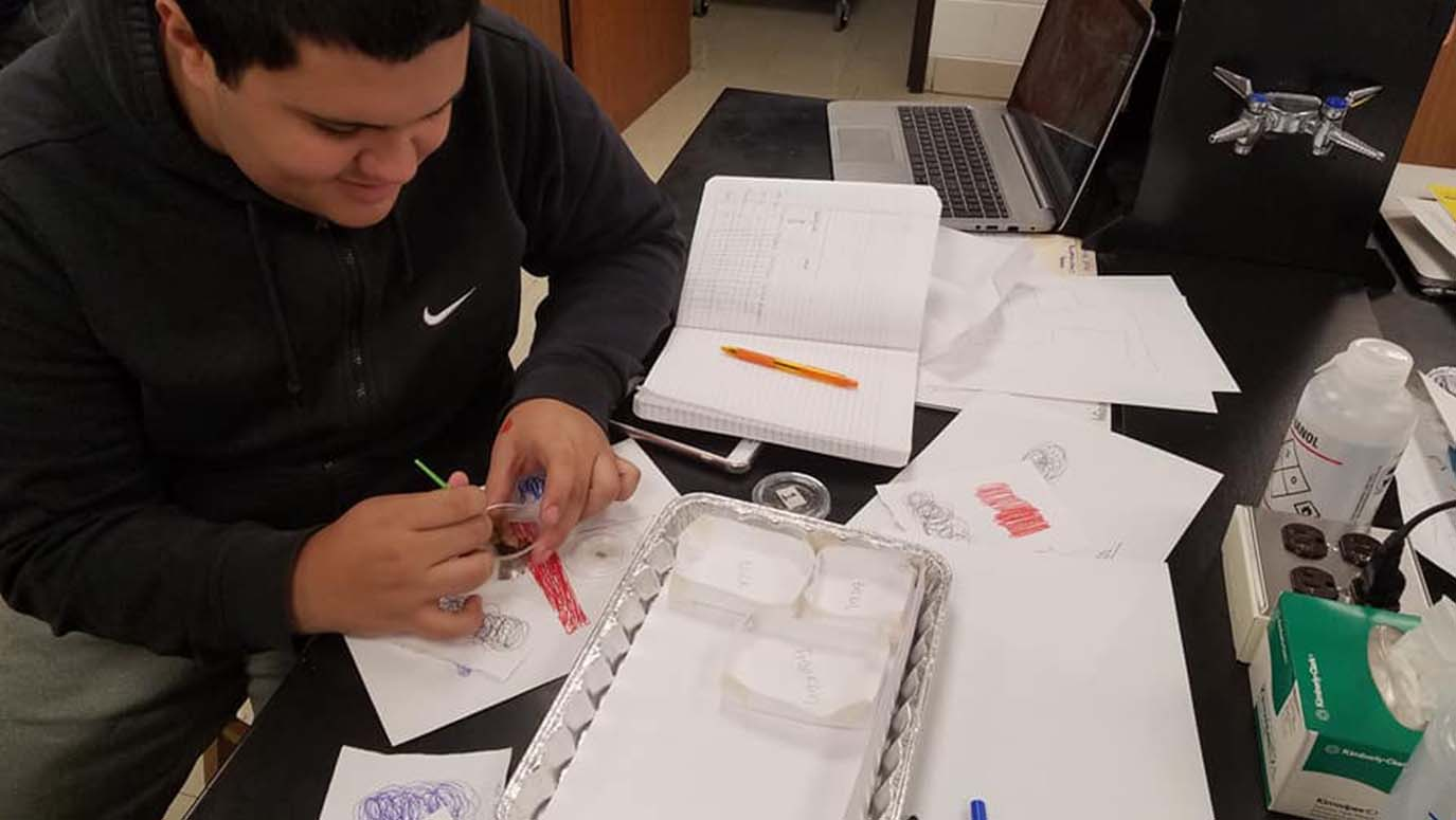 A male biology student participates in a termite behavior lab experiment